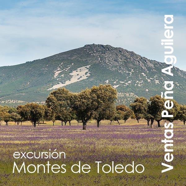 Ventas Peña Aguilera - Excursión Montes de Toledo