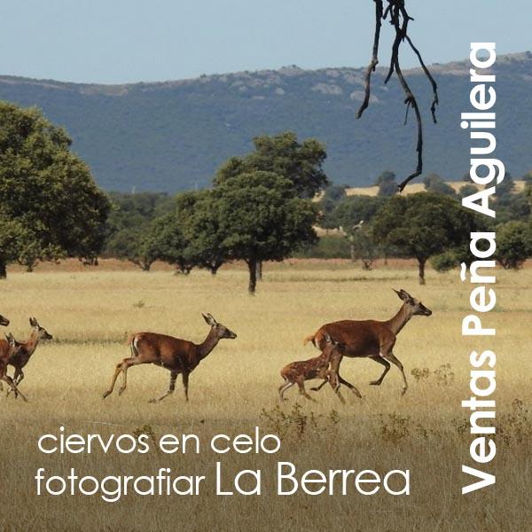 Ventas Peña Aguilera - La Berrea